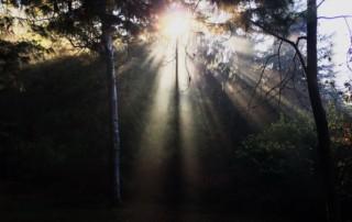 Presenti alla Vita: pratiche di Meditazione in natura